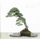japanese bonsai stand