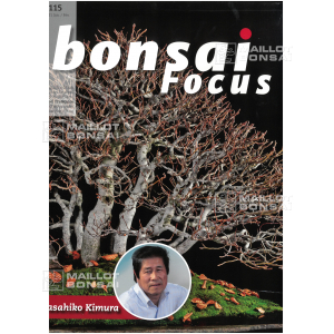 BONSAI FOCUS N° 115