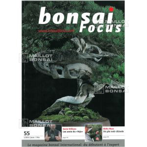 BONSAI FOCUS N° 55