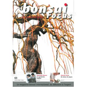 BONSAI FOCUS N° 63