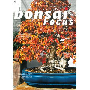 BONSAI FOCUS N° 73