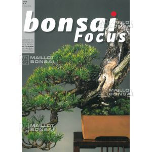 BONSAI FOCUS N° 77