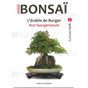 Mini bonsai N°7 érables de burger K Gun