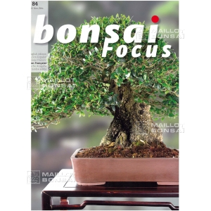 bonsai-focus-n-84