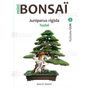 Mini bonsai Juniperus rigida handbook N°8