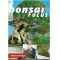 BONSAI FOCUS N° 89