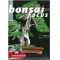 BONSAI FOCUS N° 93