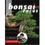 BONSAI FOCUS N° 114