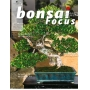 BONSAI FOCUS N° 81