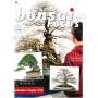 BONSAI FOCUS N° 86