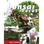 BONSAI FOCUS N°87