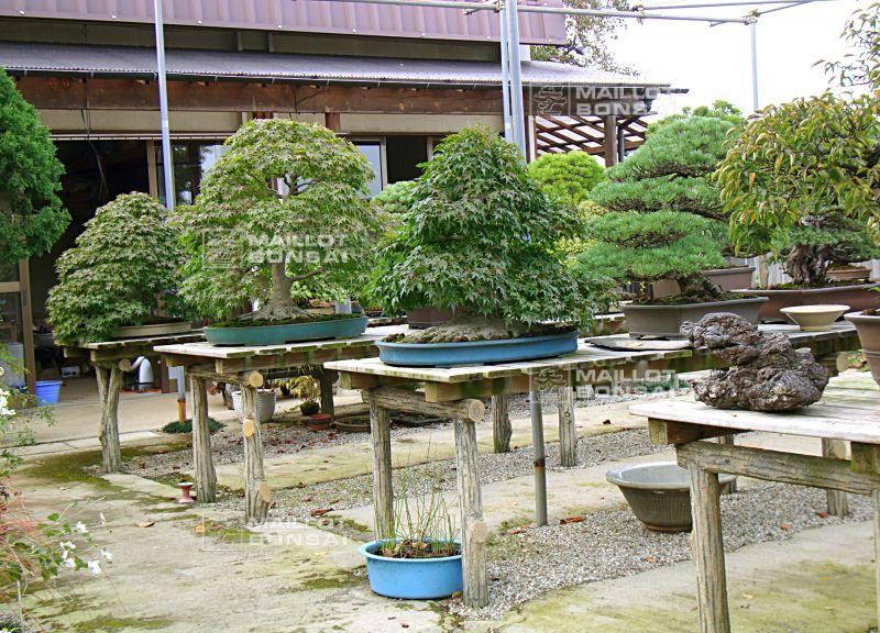 D coration mobilier jardin japonais 86 asnieres sur for Jardin 86